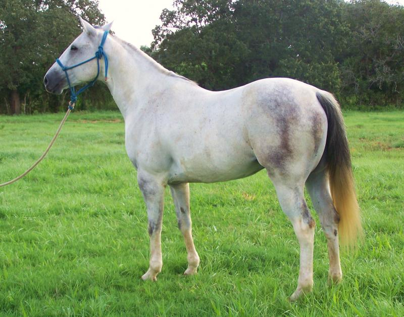 roping horses for sale
